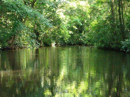 Costa Rica, Tortuguero, La Selva